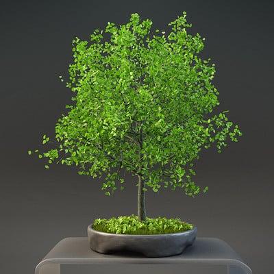 Serge patlai tree 1