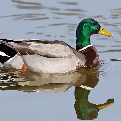 Andre smith mallard duck1