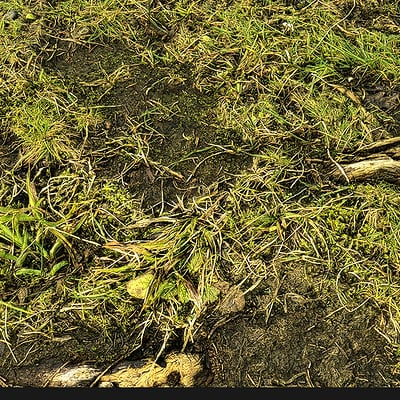 Muhammx sohail anwar forest ground 000