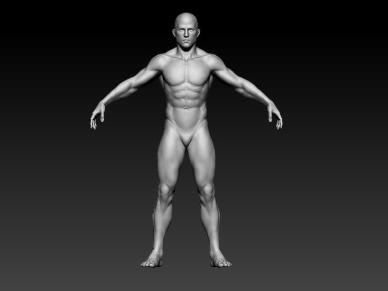 Elmo elbadry male anatomy
