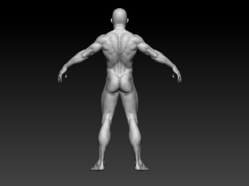 Elmo elbadry male anatomy back view