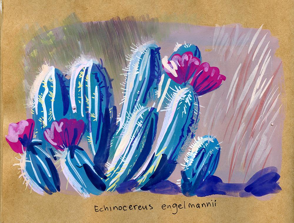 Elisa moriconi cactus 407