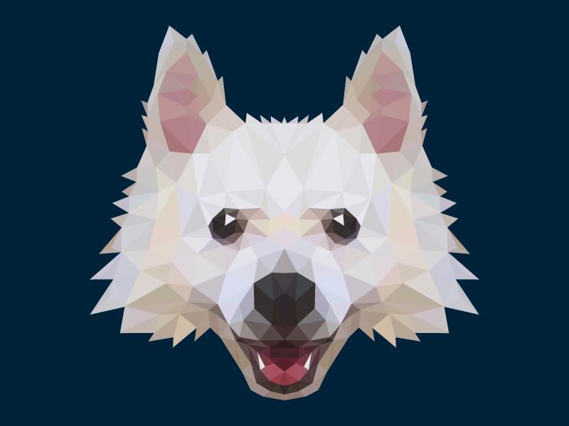 Poly Dog
