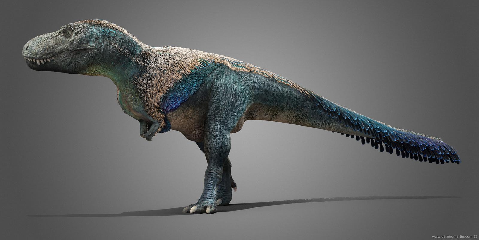 Tyrannosaurus rex male