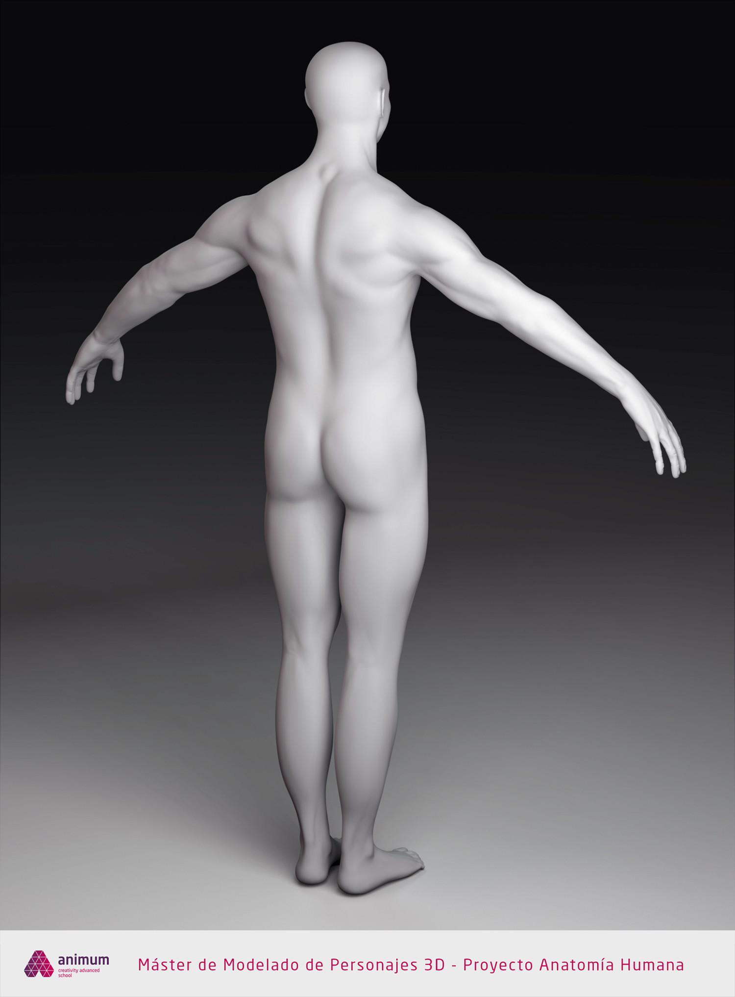 Eusebio hb humano cuerpo shaded2