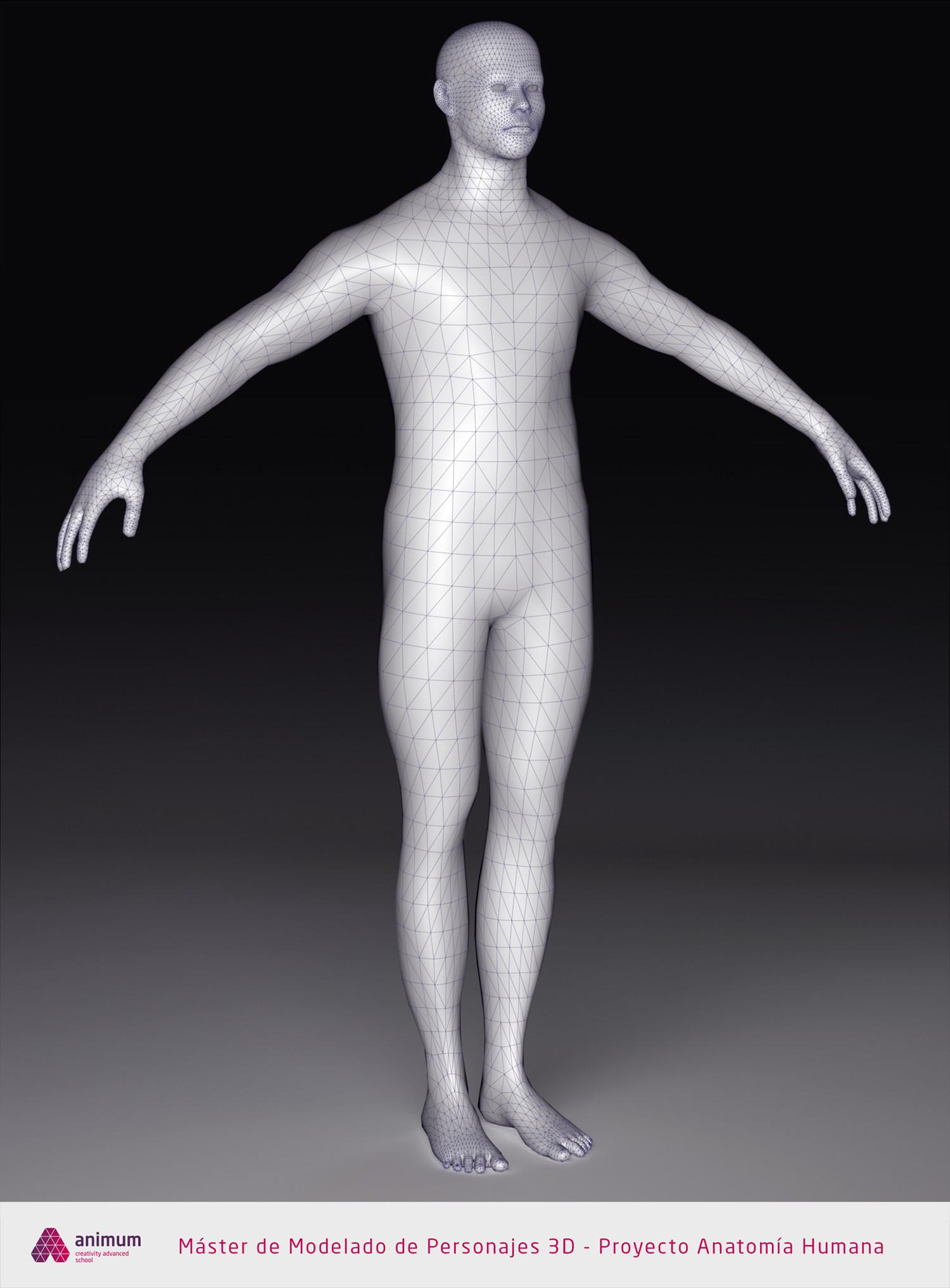 Eusebio hb humano cuerpo wire1