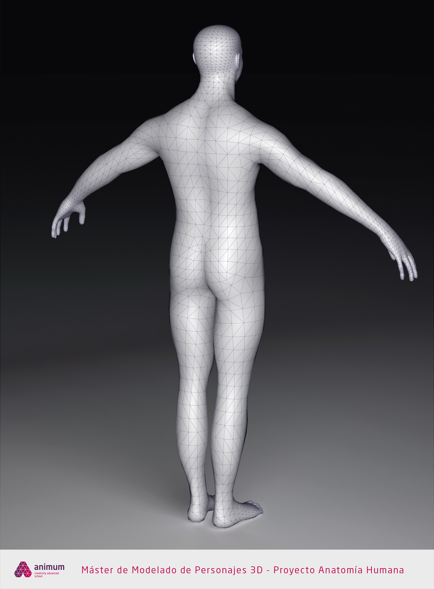 Eusebio hb humano cuerpo wire2