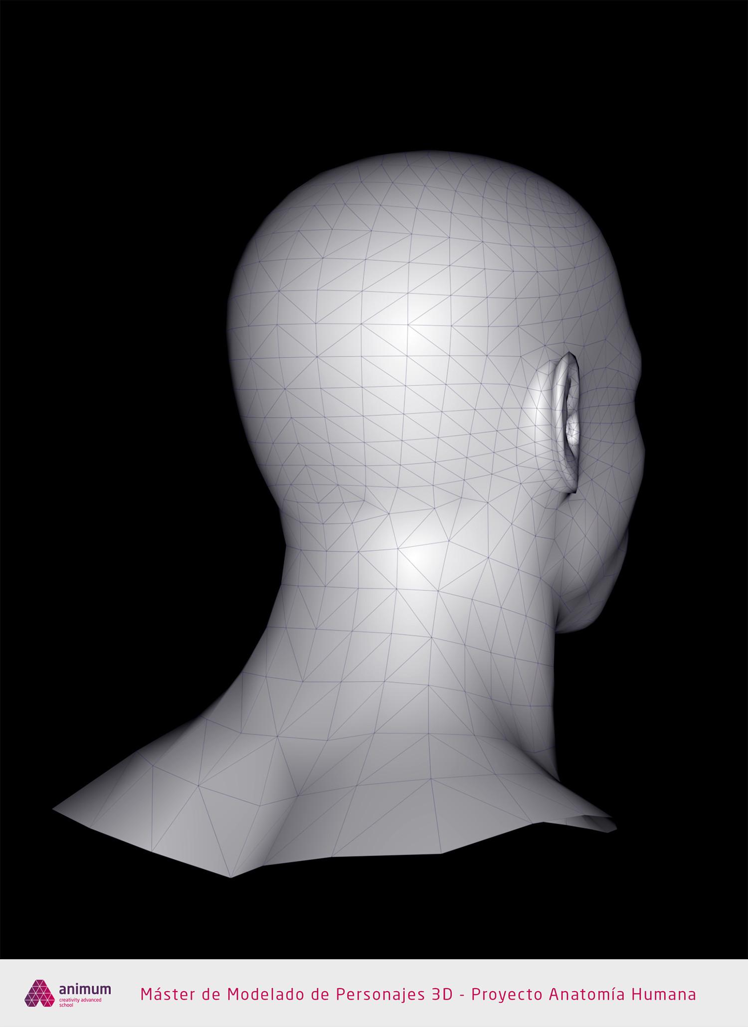 Eusebio hb humano cabeza wire2