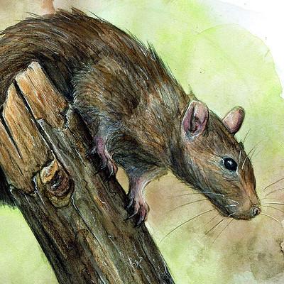 Diane georges rat