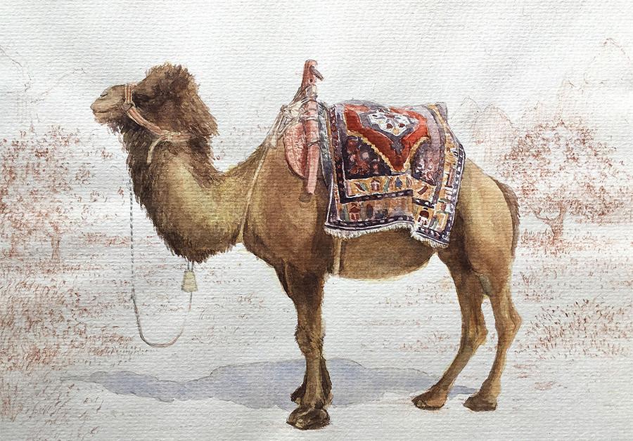 Robert baird cappadocia camel watercolour