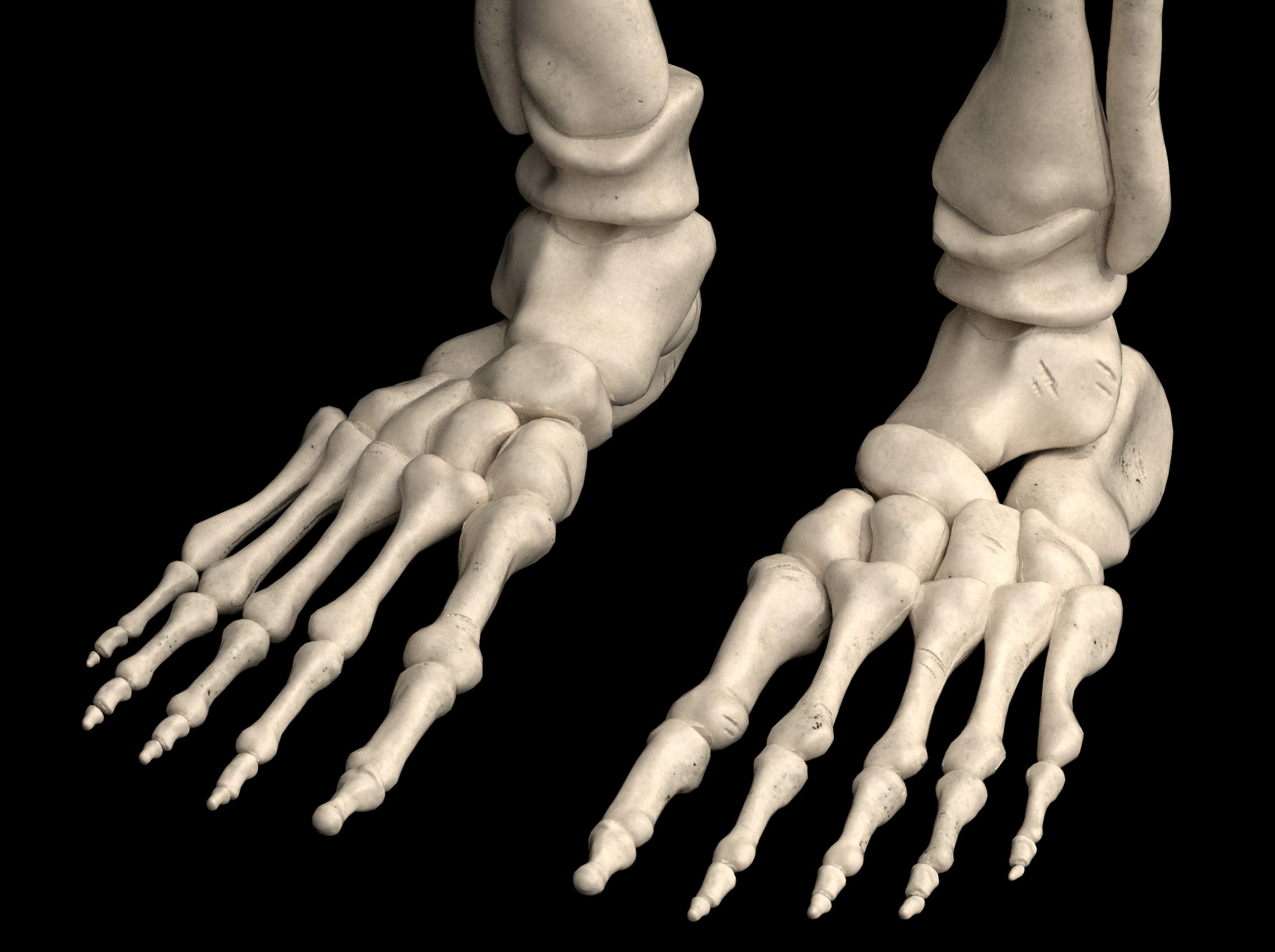 Joshua Harler Skeleton Study
