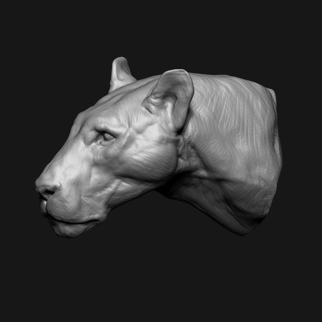 Jeremy hanna lioness 04