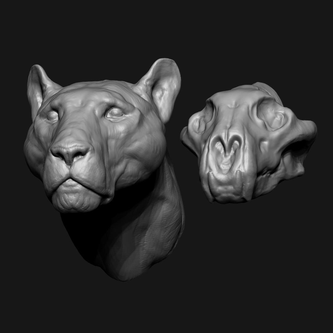 Jeremy hanna lioness 06