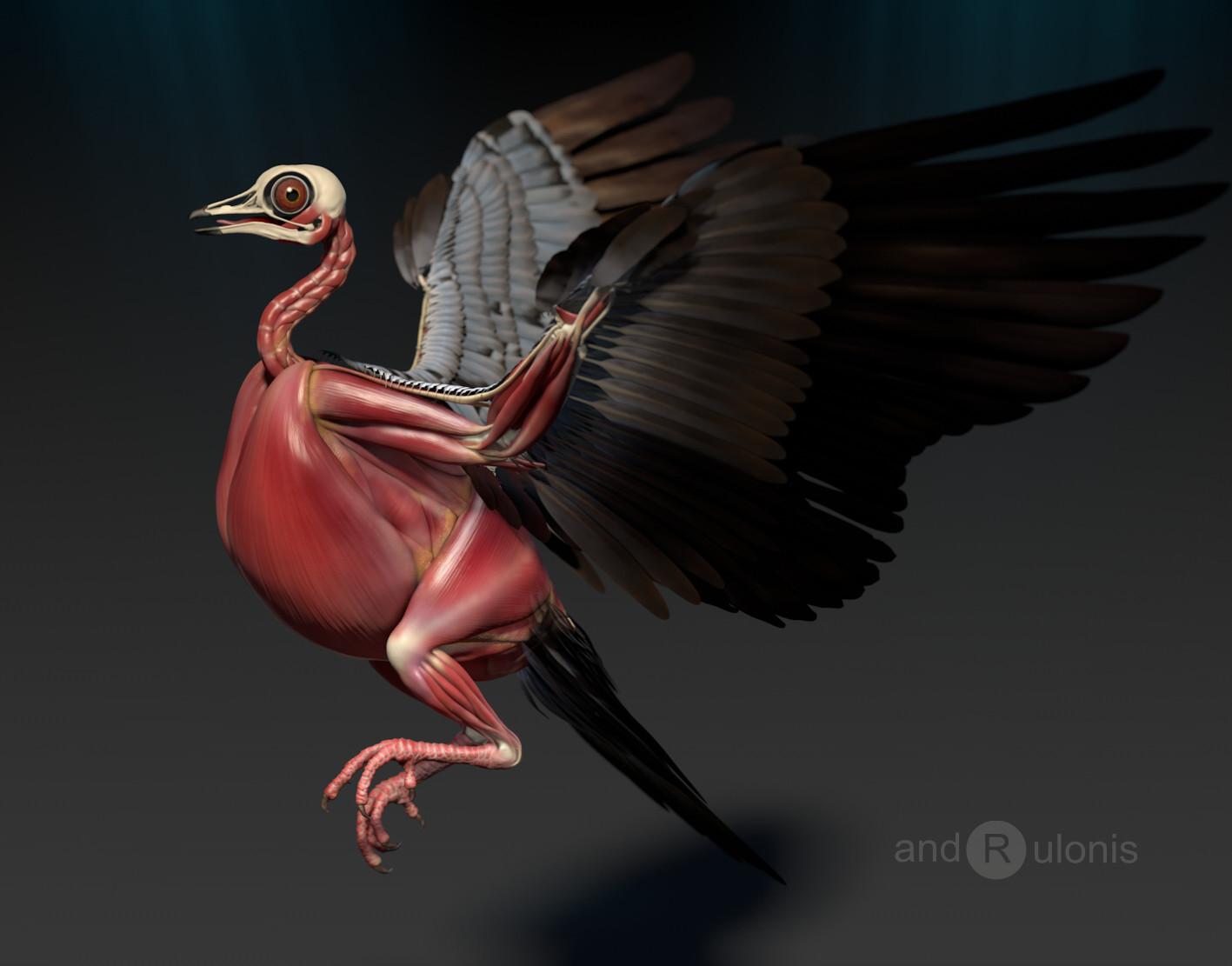 Dariusz andrulonis ptak 05b