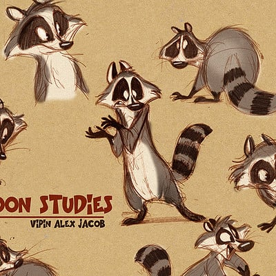 Vipin jacob raccoons