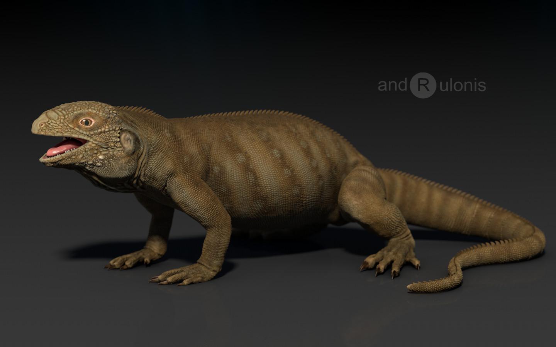 Dariusz andrulonis iguana side