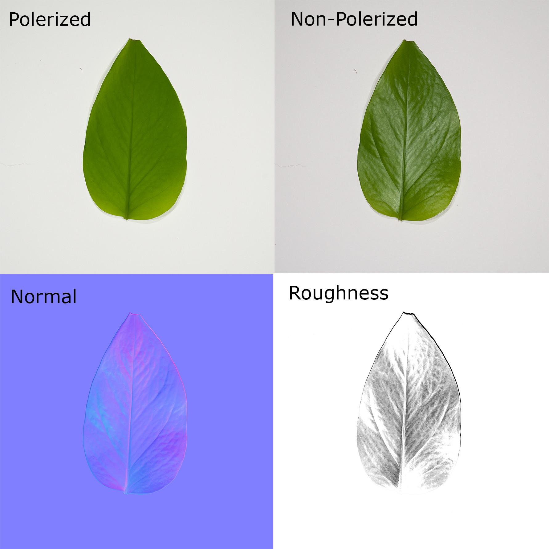 Dave riganelli leaf 4