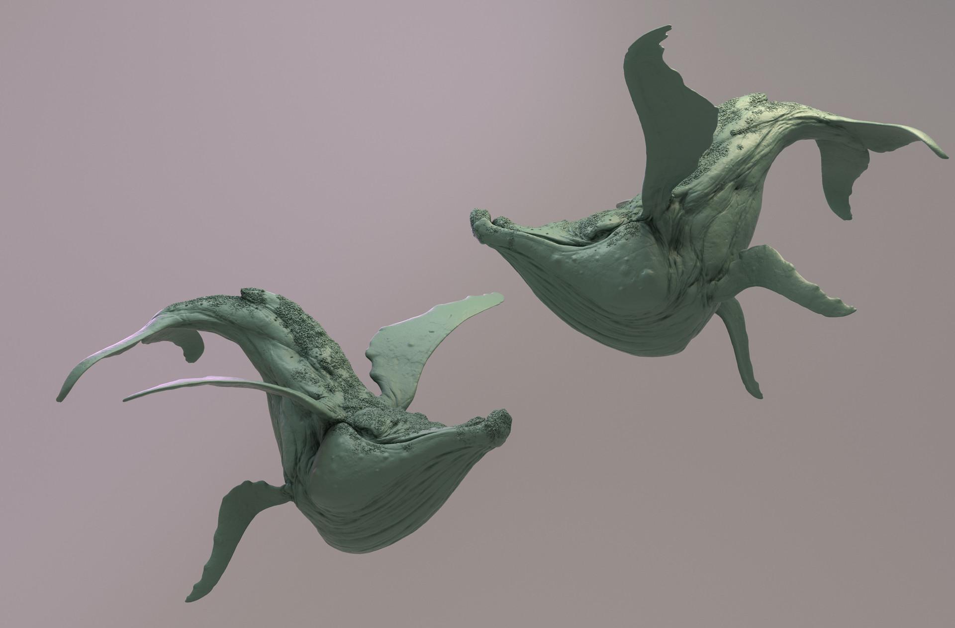 Mickael lelievre whale02