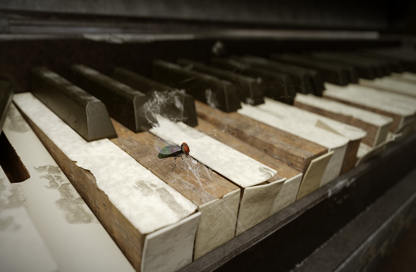 Fly on an old piano