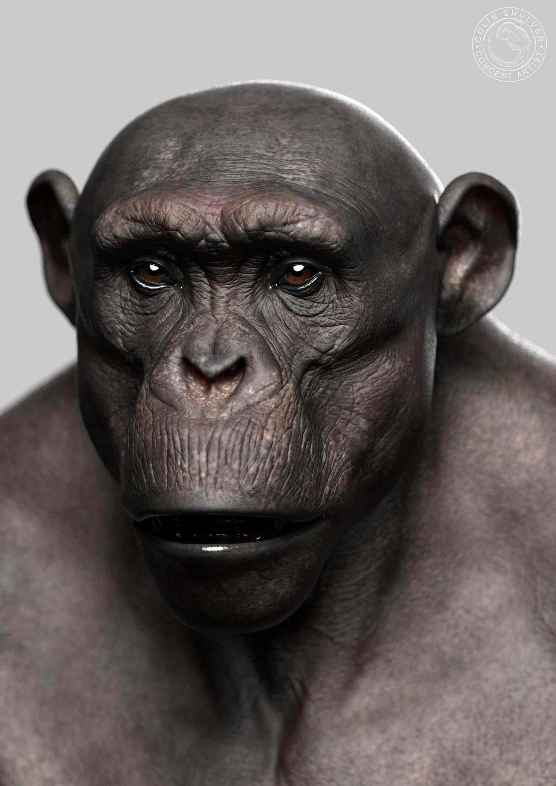 Chimpanzee - Part 1