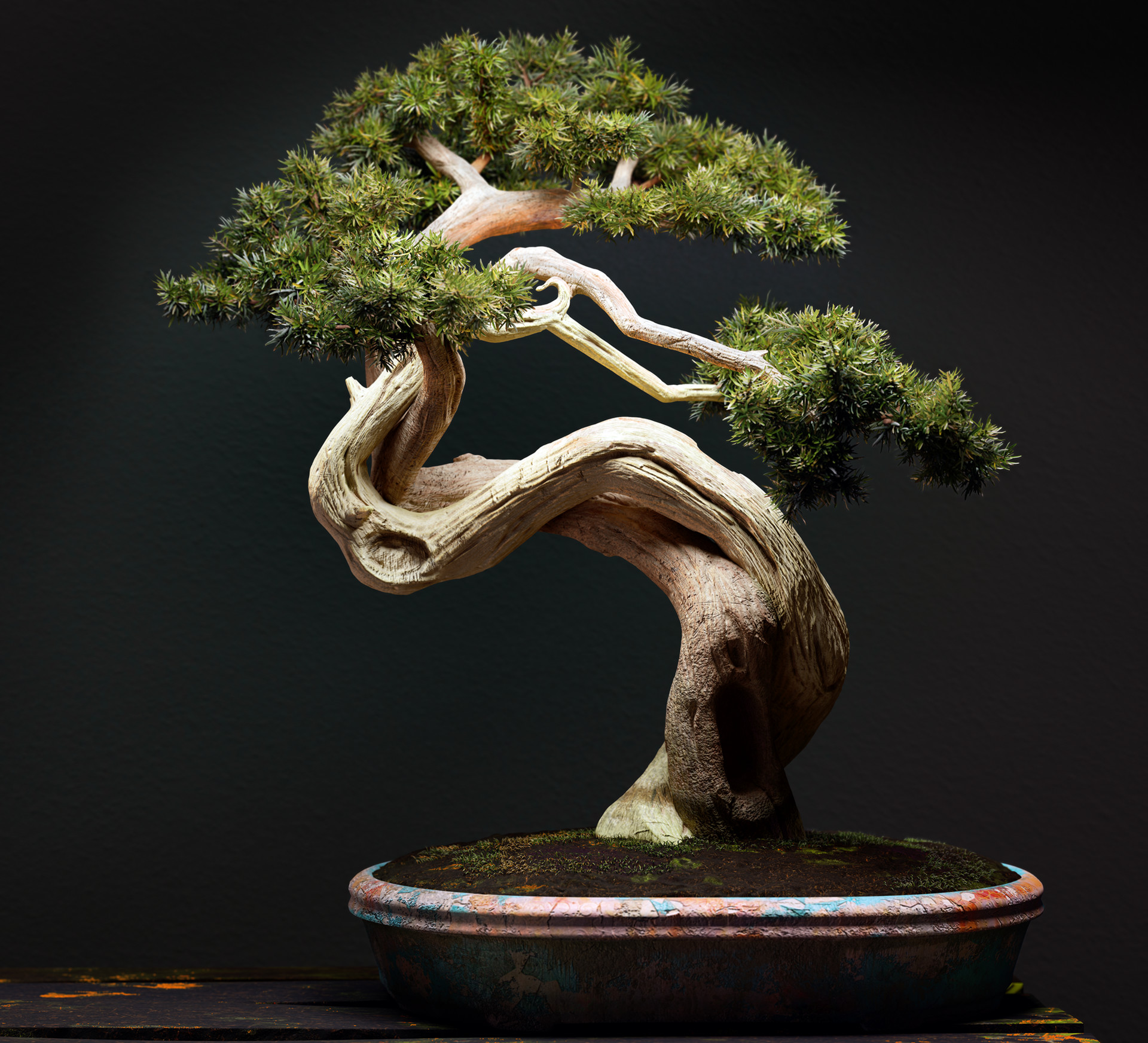 Dani palacio postpro bonsai