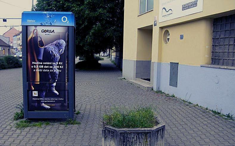Jan jinda gorila print 03