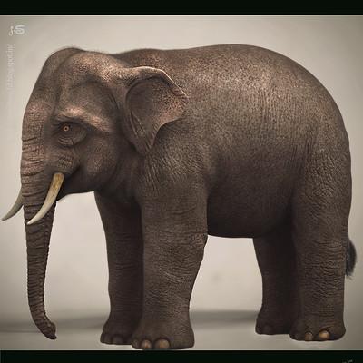 Surajit sen asian elephant surajit sen
