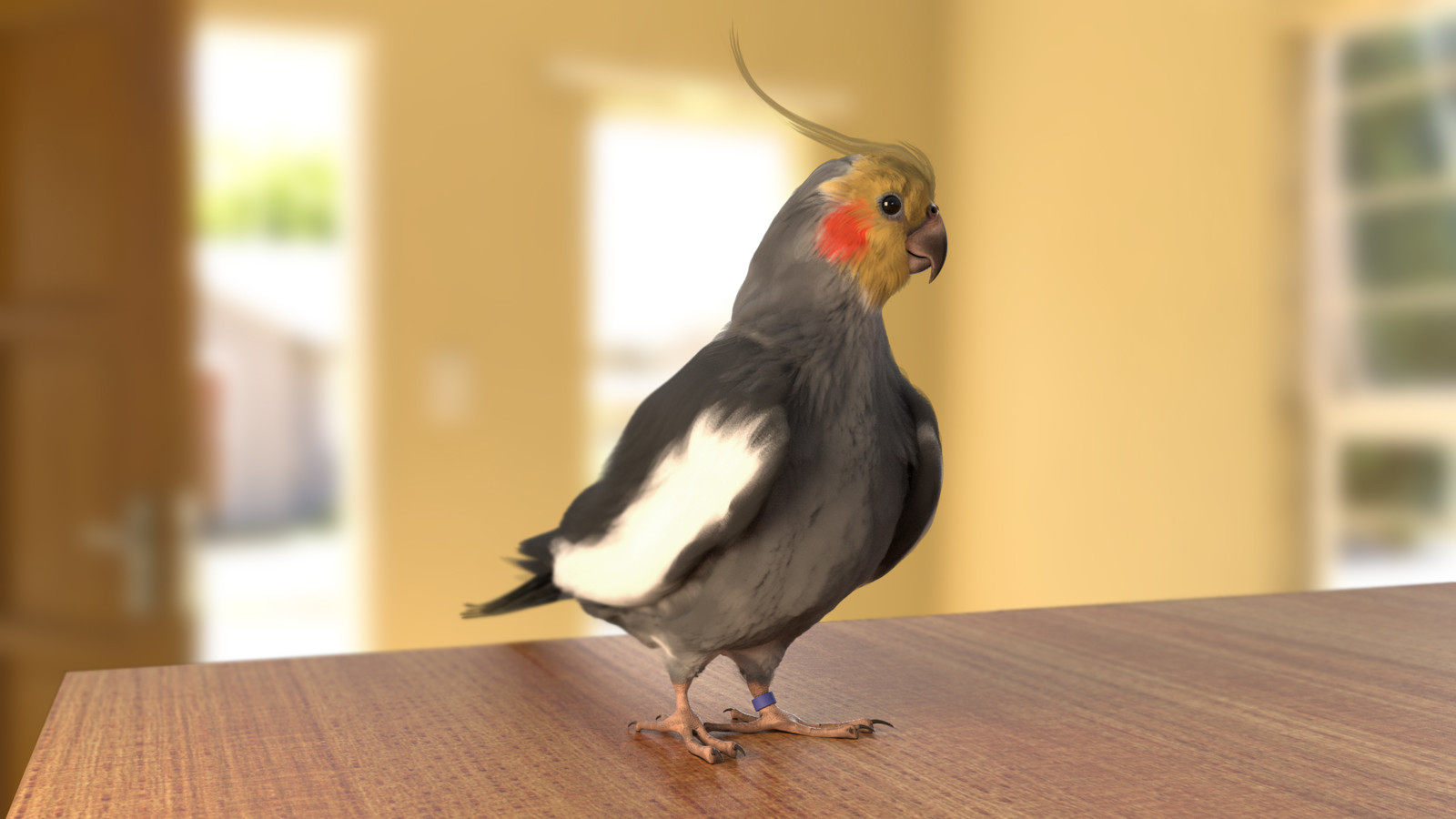 Tweety- The Cockatiel