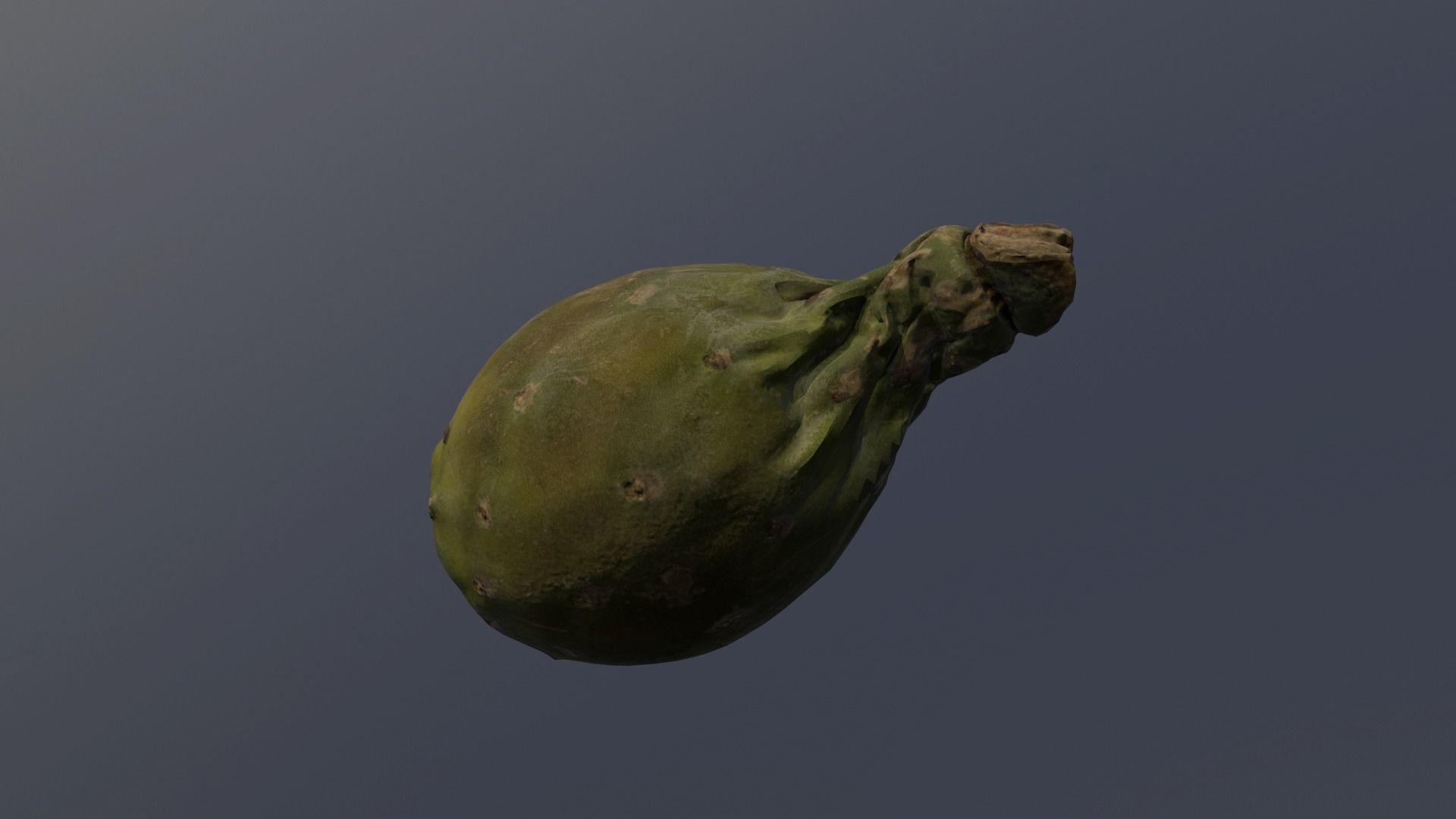 Carlos faustino opuntia ficus indica indian fig 3d model low poly obj 3ds fbx mtl 1