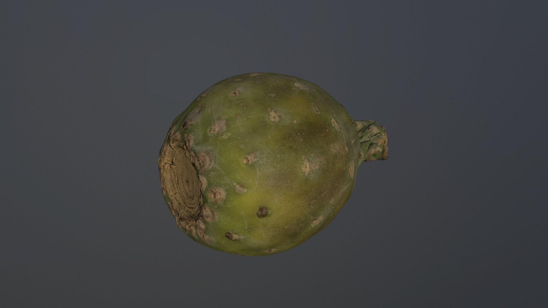 Carlos faustino opuntia ficus indica indian fig 3d model low poly obj 3ds fbx mtl 3