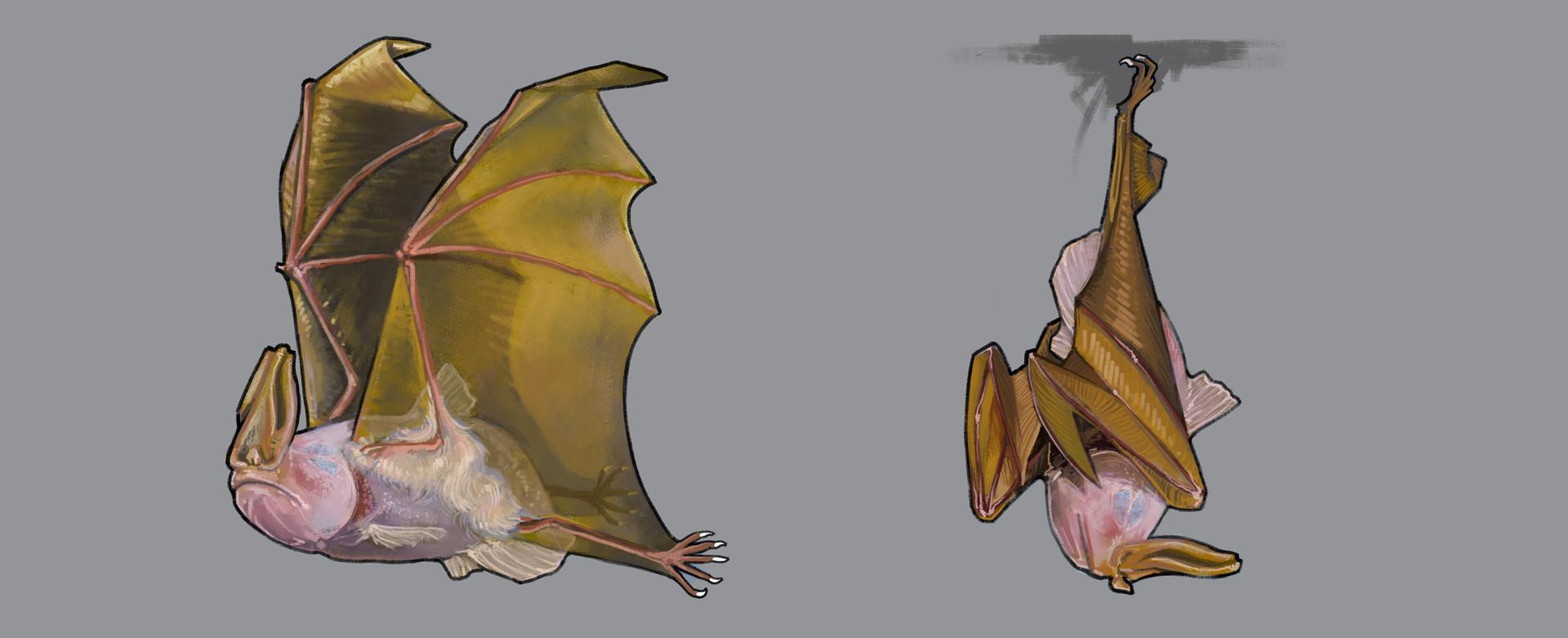 cave bat thesis