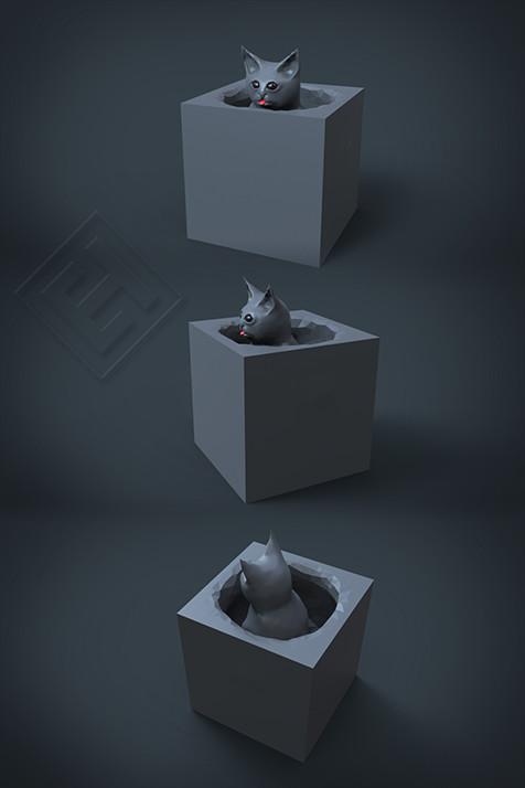 cat in the box