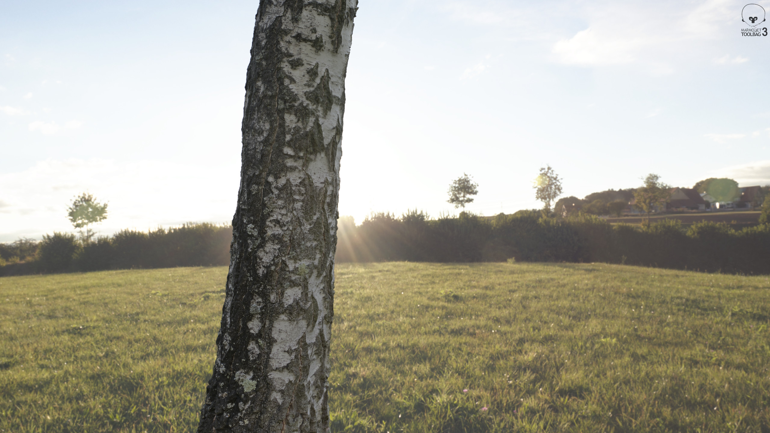 photogrammetry - scanned tree (textured)