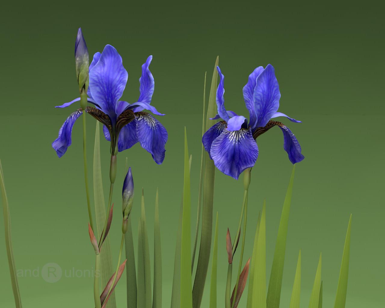 Dariusz andrulonis 1 iris close up