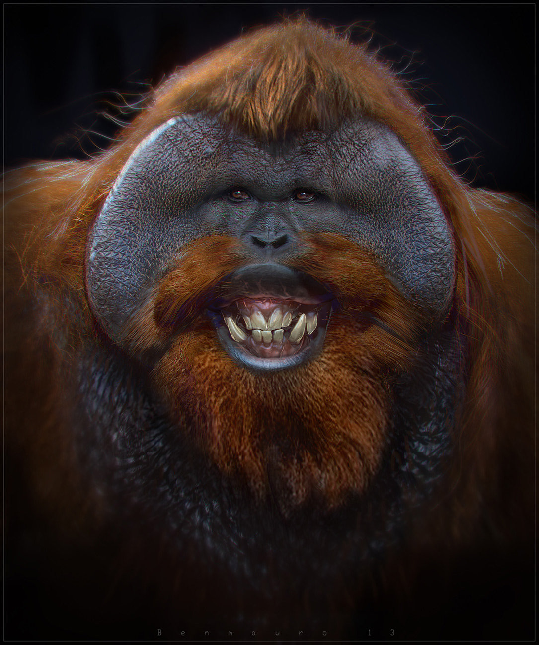 Orangutan 2