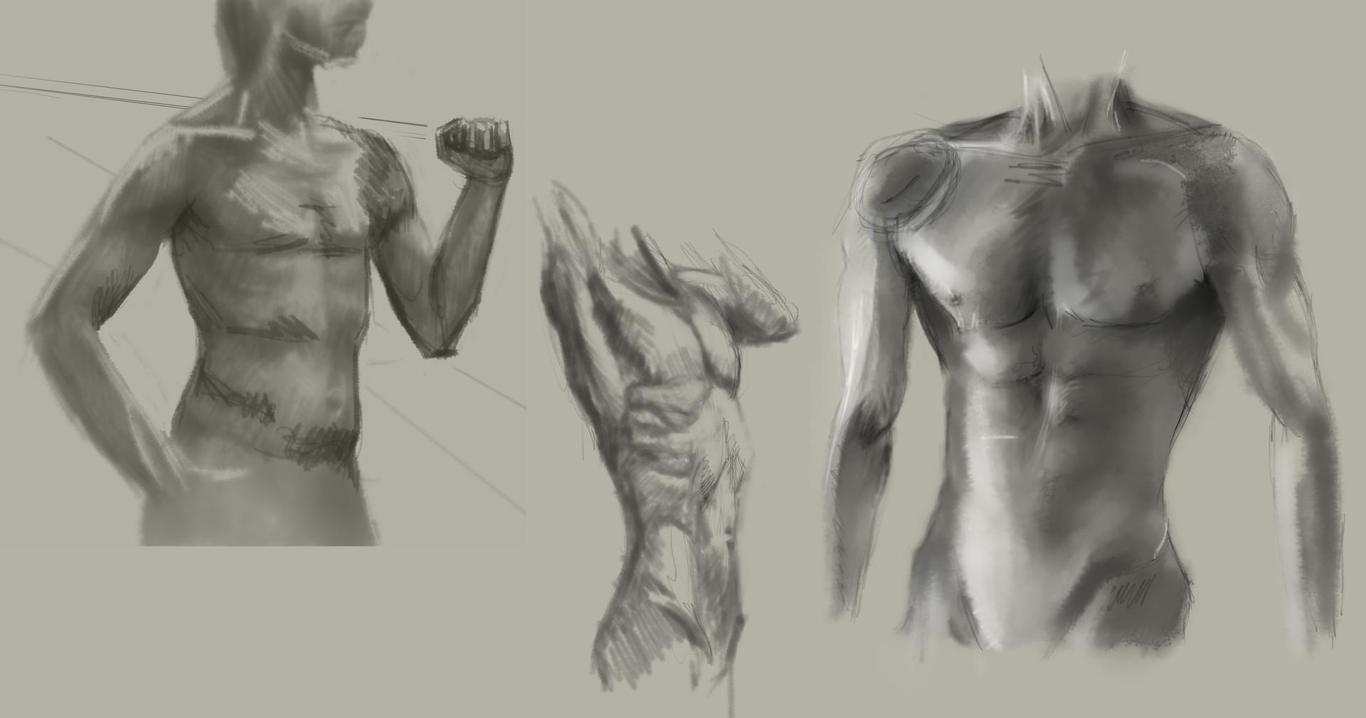 Gabor drescher anatomtors2