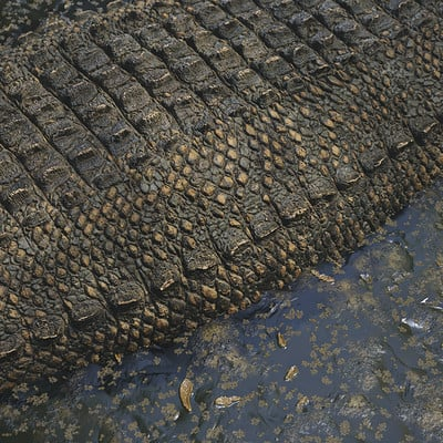 Study: Crocodile Scales
