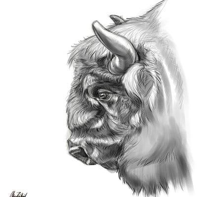 Okan bulbul bison01