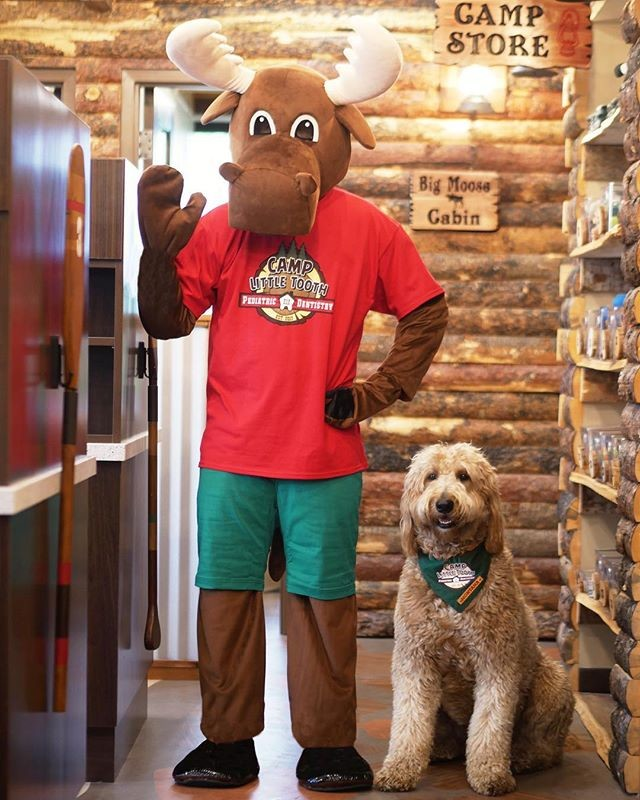 Max the Moose and Montana the Camp Dog