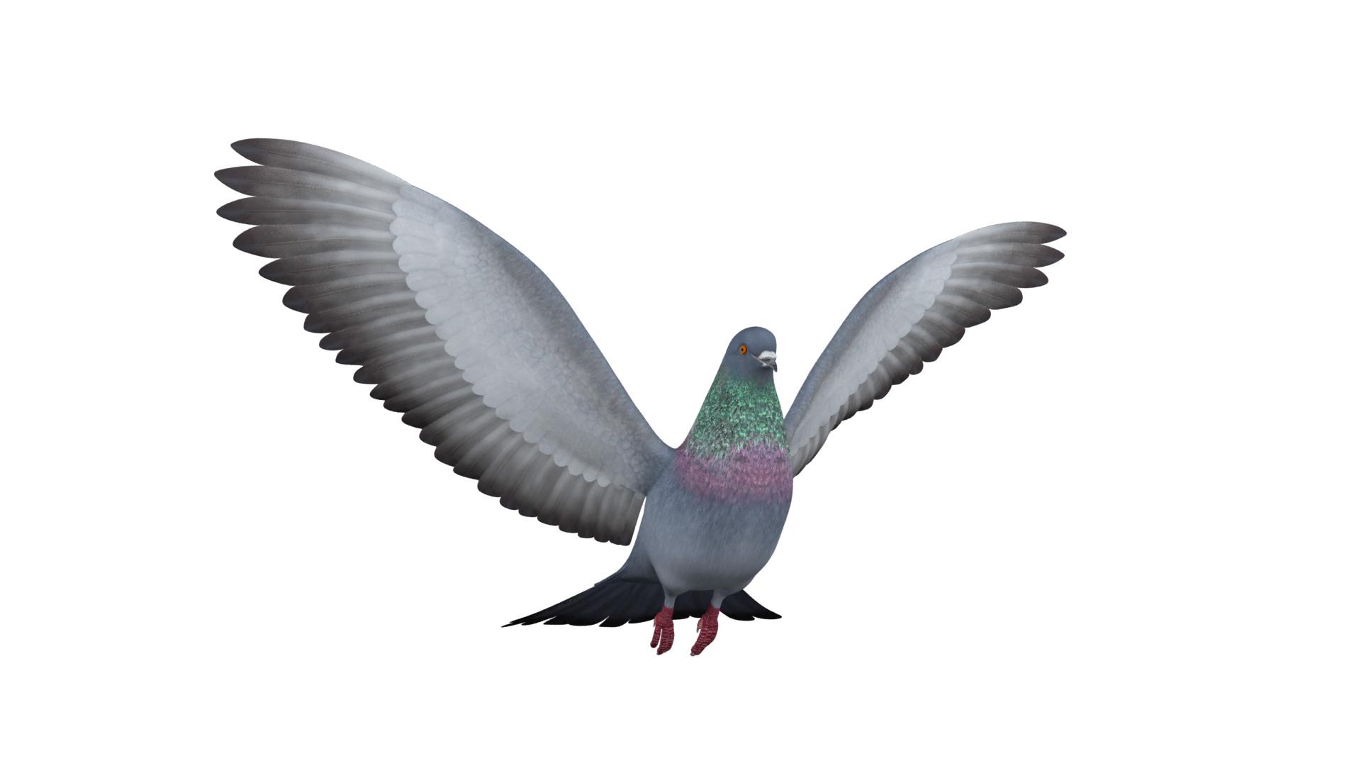 Alan kichl pigeon0979