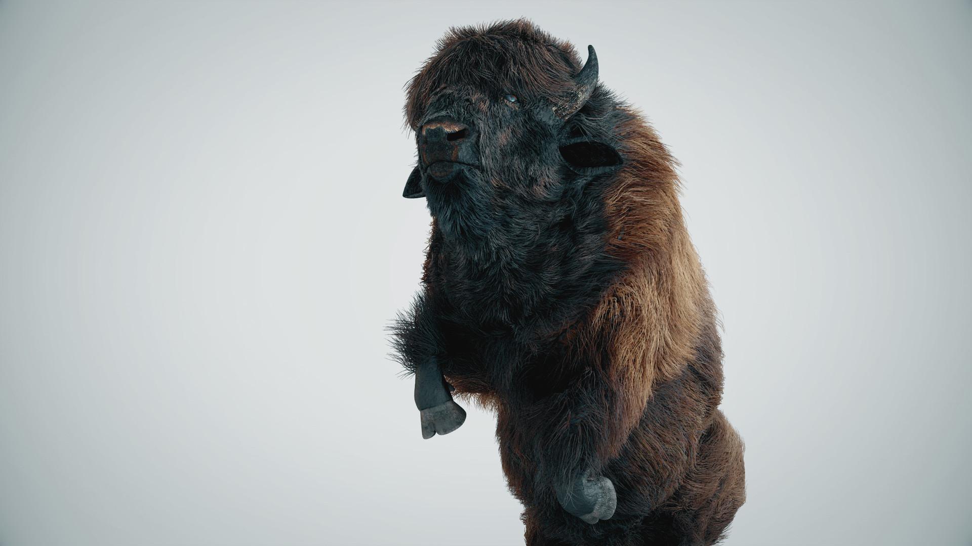 Alan kichl buffalo 01 v03 img 03