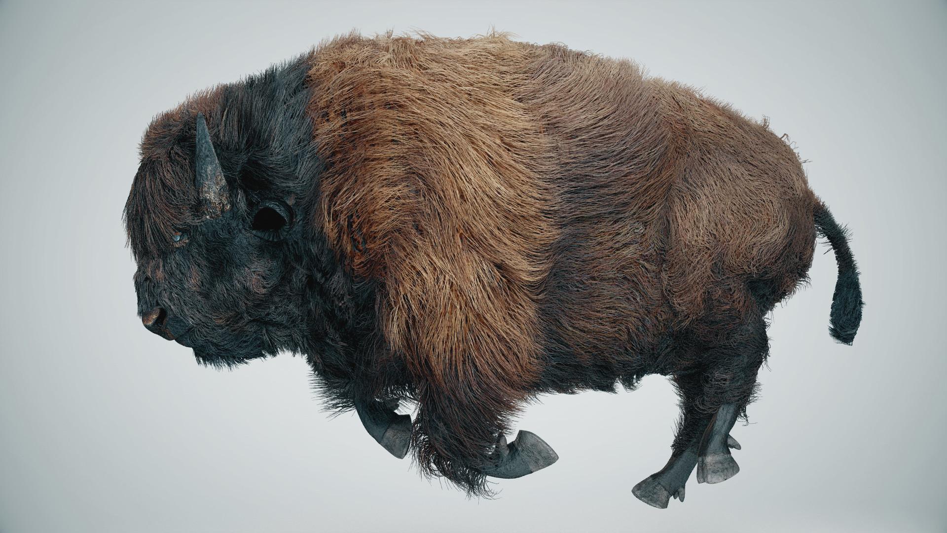 Alan kichl buffalo 01 v03 img 02