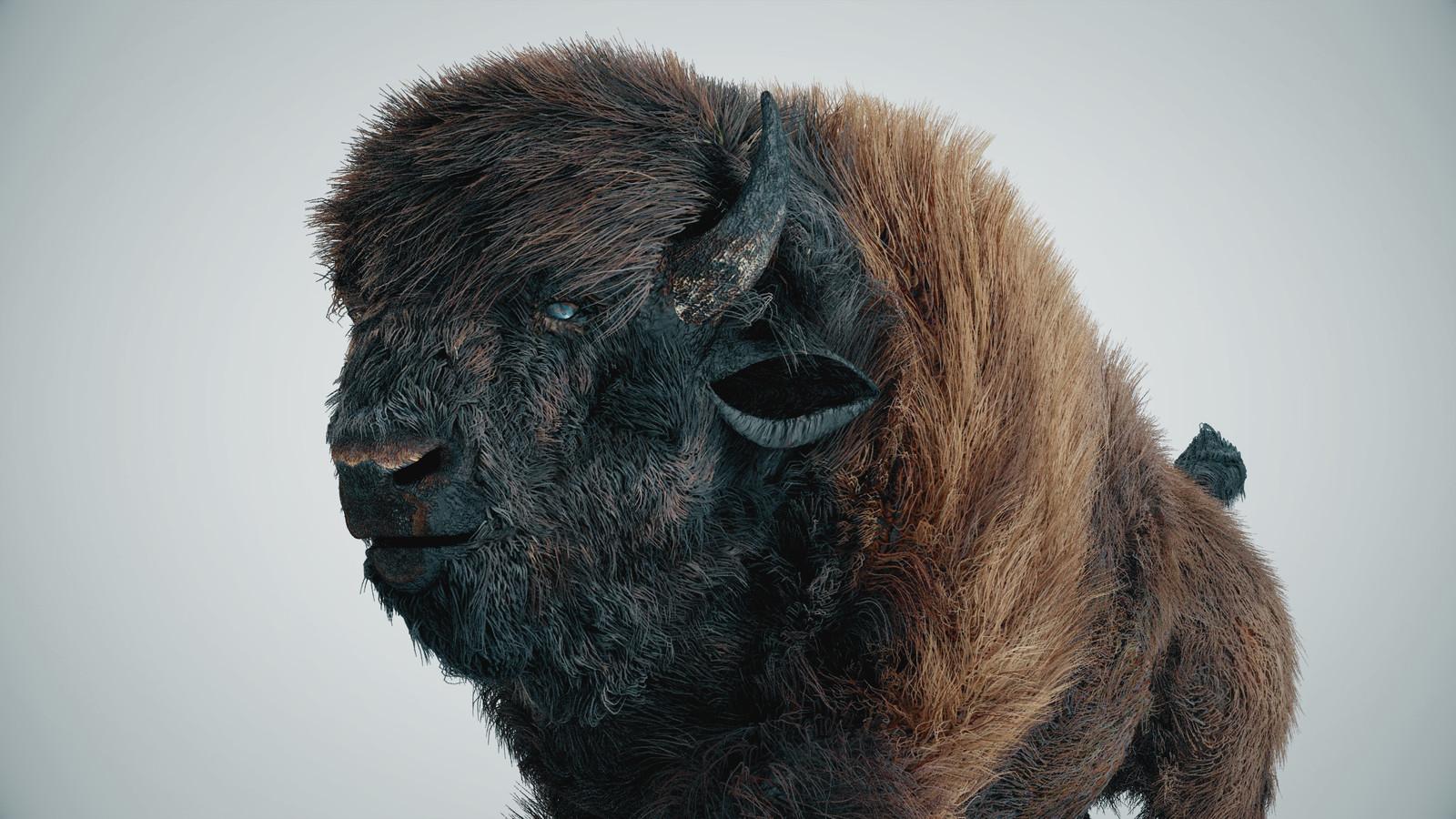 Buffalo hair simulation