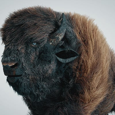 Buffalo hair simulation