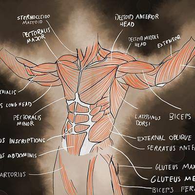 David bock anatomy tracing 2 finished flat