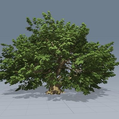 Masud zangi tree1