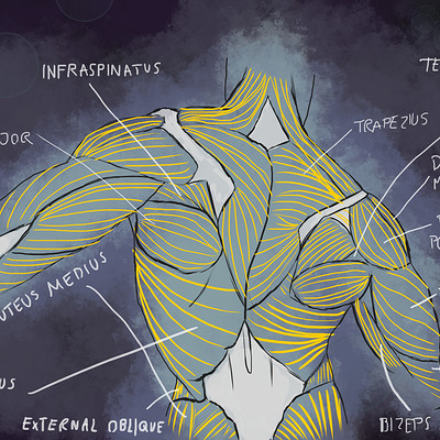 David bock anatomy tracing 5 finished flat