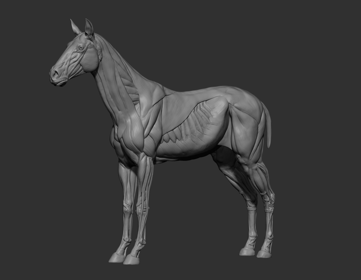 Early WIP. Started with a neutral horse