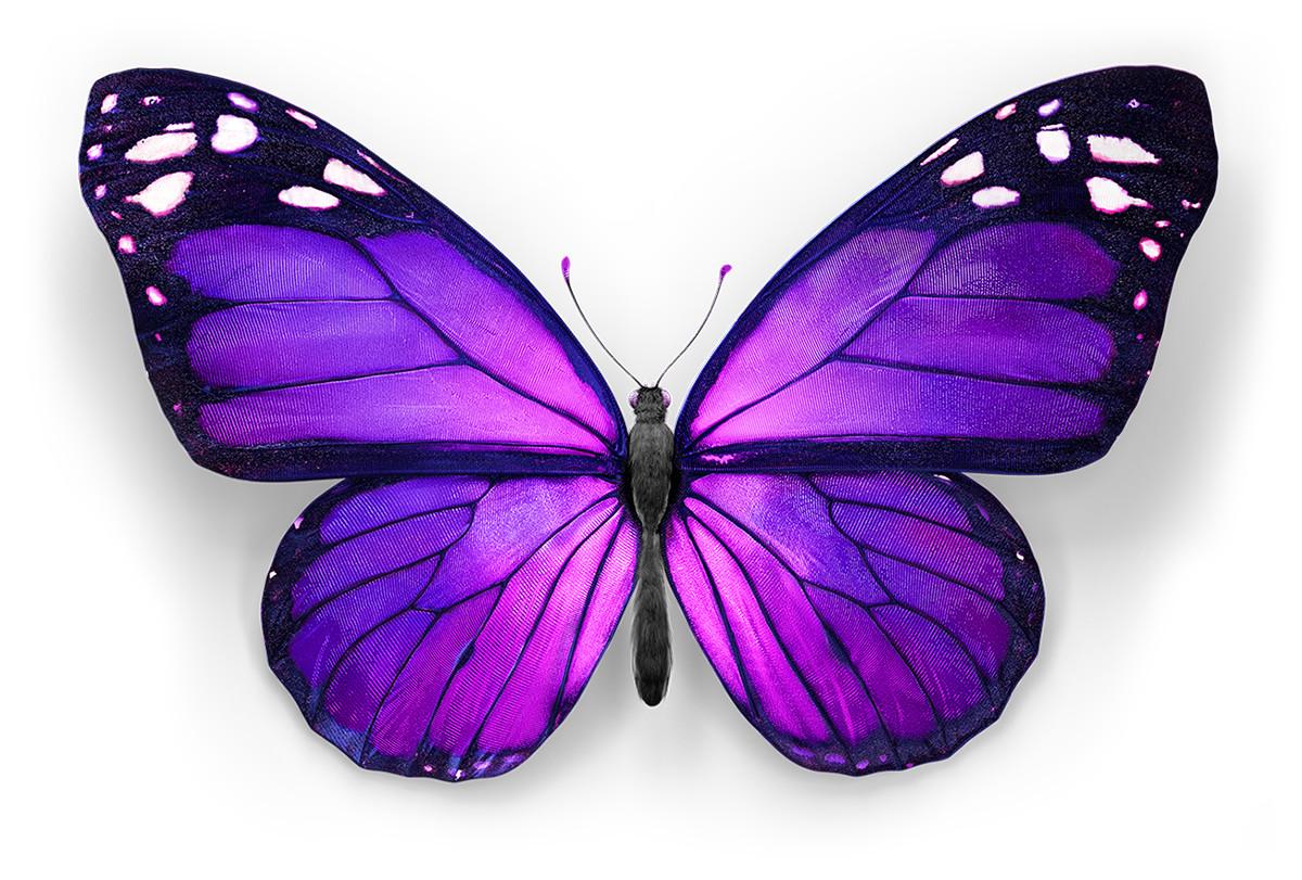 Marcelo souza butterfly prplpnk top d1 2