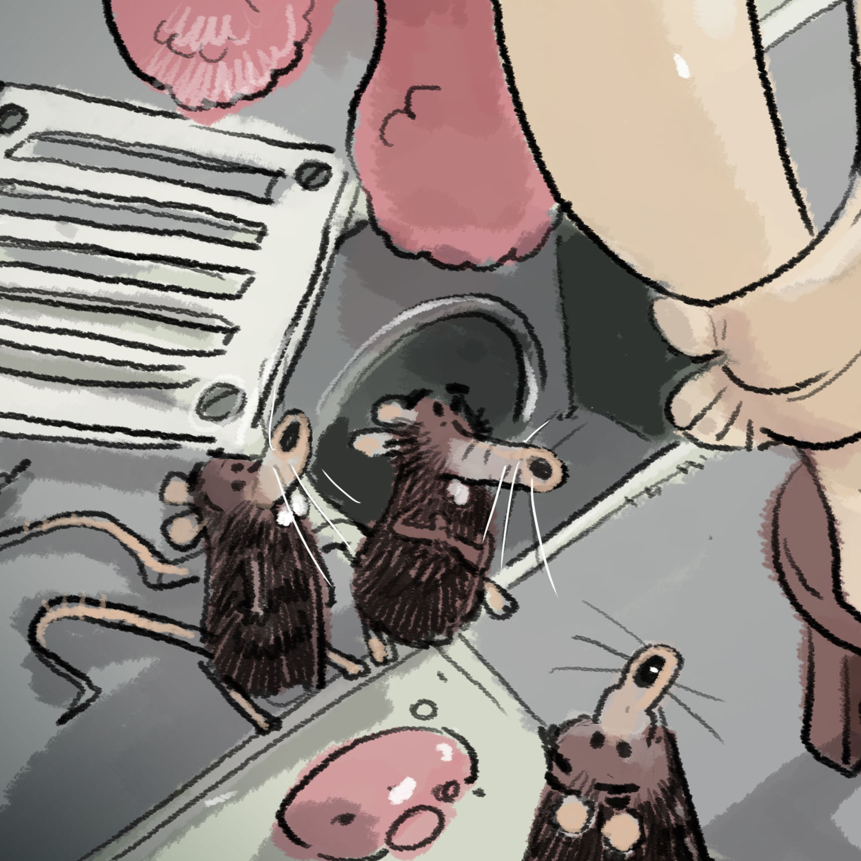 Guillermo casas ratones1